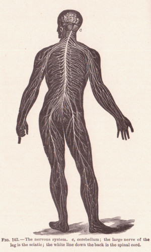 chiropractors examine the complex nervous system