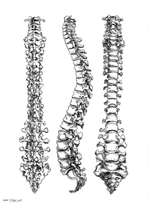 spine sketch 3 views
