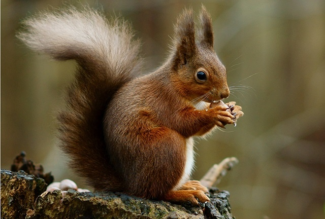 stress from dieting, funny squirrel
